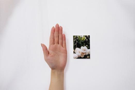 ハーフサイズプリントのサイズイメージ